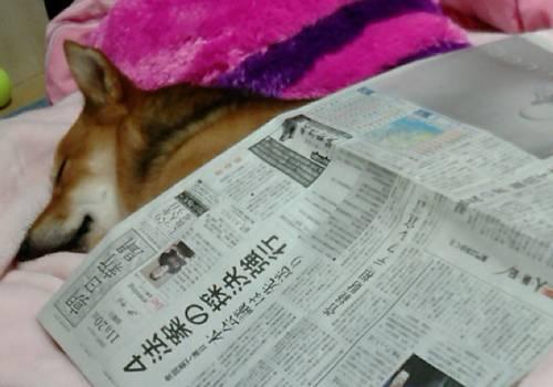 新聞紙とは失礼ね!