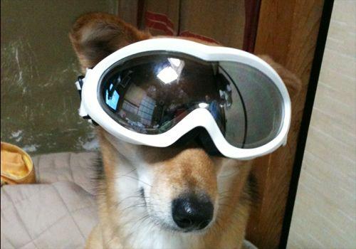 紗南もスキーやりたい!