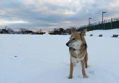 雪の原を楽しむ紗南