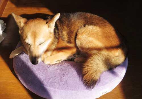 陽だまりでうたた寝の紗南