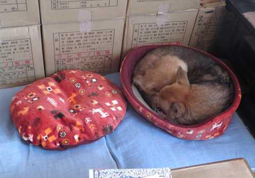 紗南ちゃんの新しい寝床