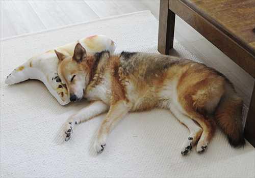 枕で寝る紗南ちゃん