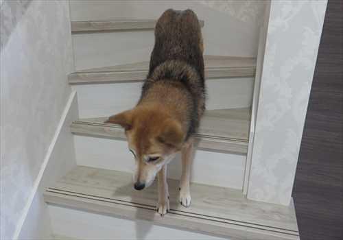 階段が怖い紗南ちゃん