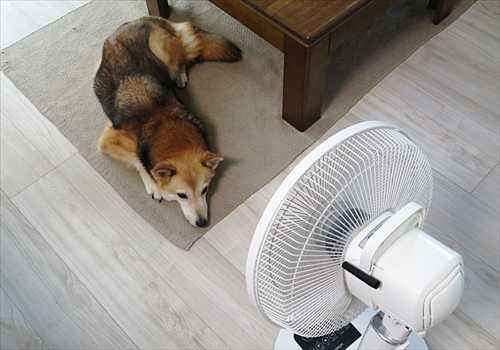 扇風機で涼む紗南ちゃん